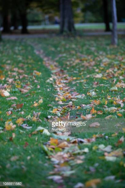 Path of fallen leaves on green meadow Impressions of the Fall in Munich on October 30 2018