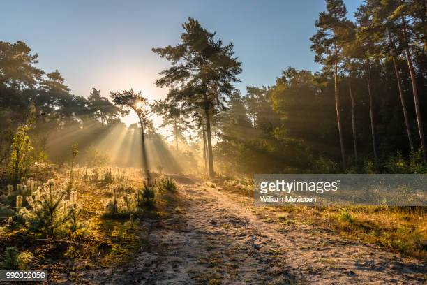path of light - william mevissen stock pictures, royalty-free photos & images