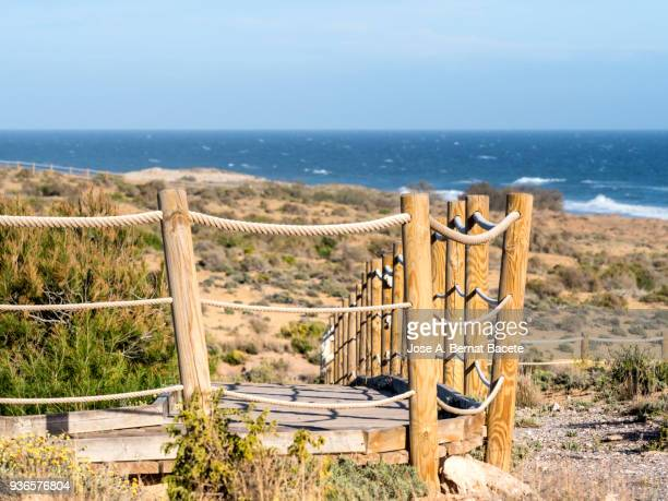 Path of sand that he leads to the beach between dunes with flowers and grasses with posts and ground of wood.