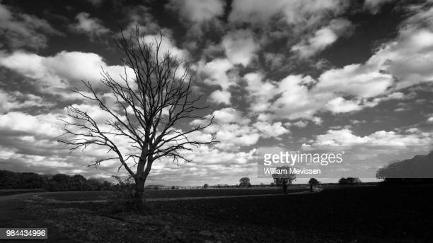 path of trees (b&w) - william mevissen stockfoto's en -beelden