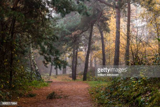 path of trees - william mevissen stock pictures, royalty-free photos & images