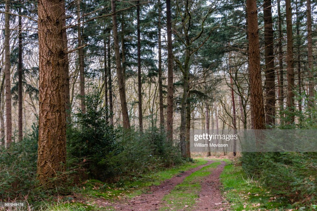 Path Of Trees : Foto de stock