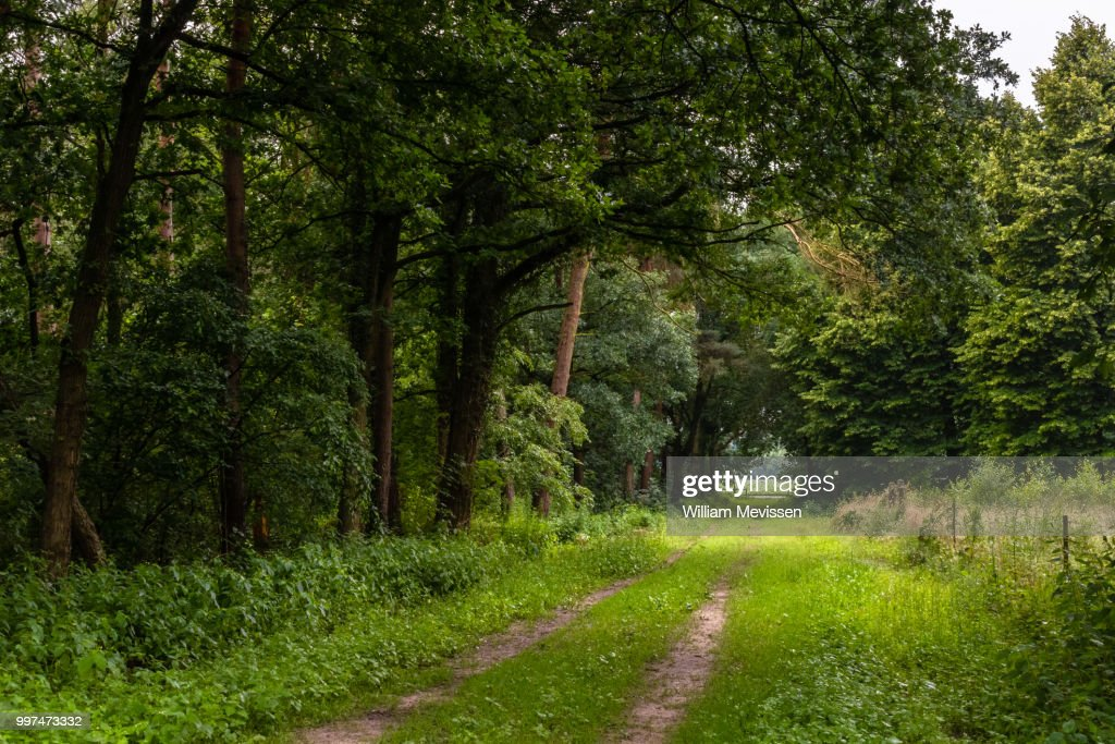 Path Out Of The Woods : Stock Photo