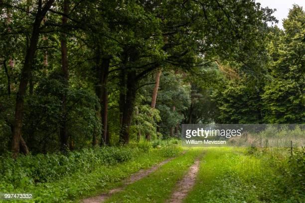 path out of the woods - william mevissen bildbanksfoton och bilder