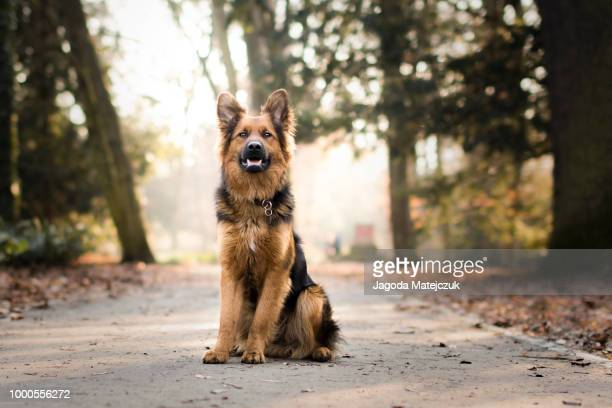 path - mixed breed dog stock pictures, royalty-free photos & images