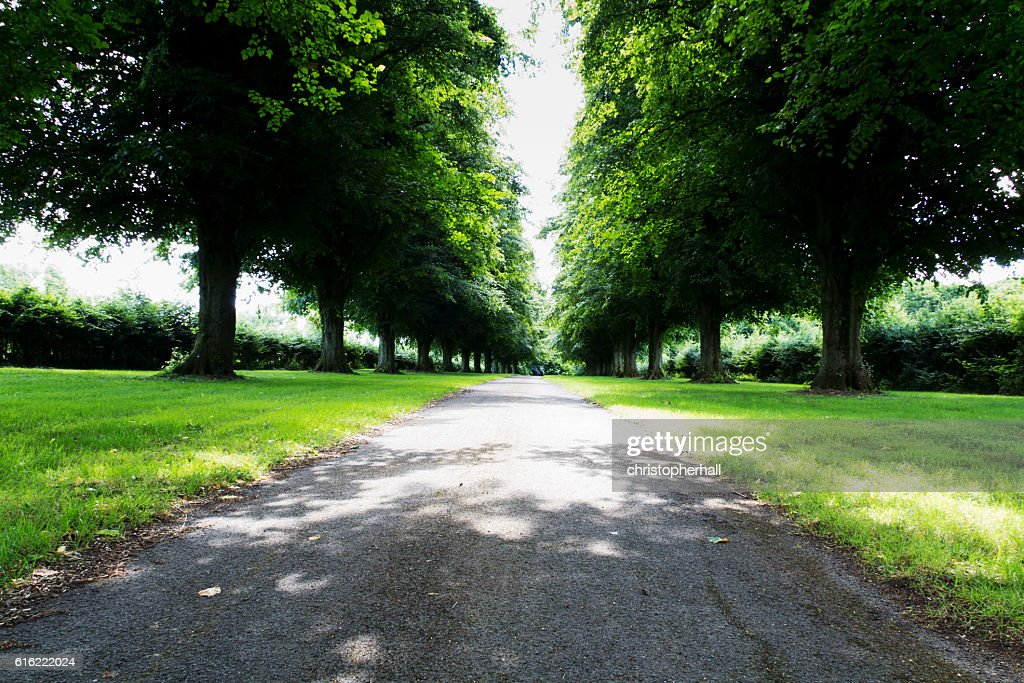 Path surrounded by trees on both sides : Stock-Foto