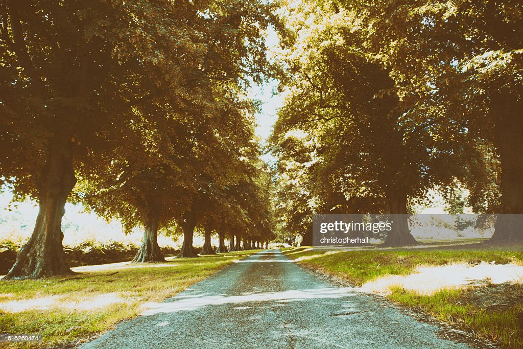 Path surrounded by trees on both sides : Stock Photo