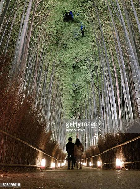 A path through a bamboo forest in the ancient Japan capital of Kyoto is lit up on a trial basis on Dec 7 as part of a lightingup event in the...