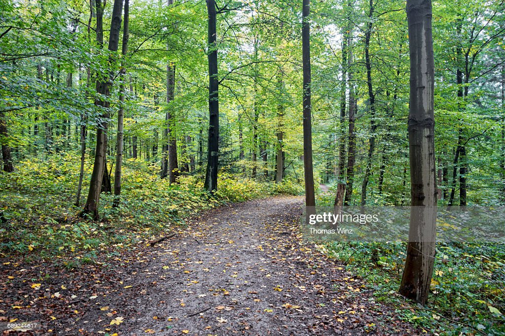 Path through a forest : Stock Photo