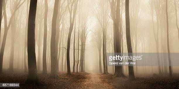 path through a misty forest during a foggy winter day - forêt photos et images de collection