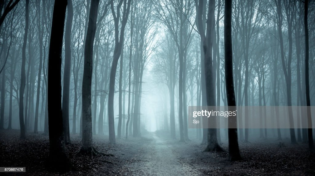 Path through a misty forest during a foggy winter day : Stock Photo