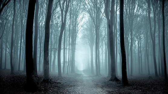 Path through a misty forest during a foggy winter day 870867476
