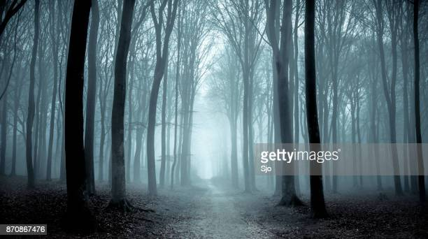 path through a misty forest during a foggy winter day - wood stock pictures, royalty-free photos & images