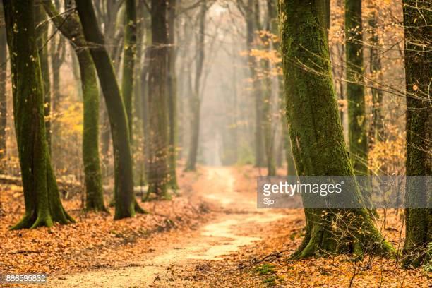 Pad door een mistige bos tijdens een mistige winterdag