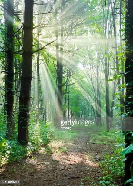 Chemin à travers une forêt enchantée