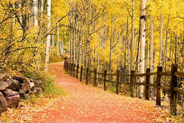 Path Through Aspens Trees Wall Art