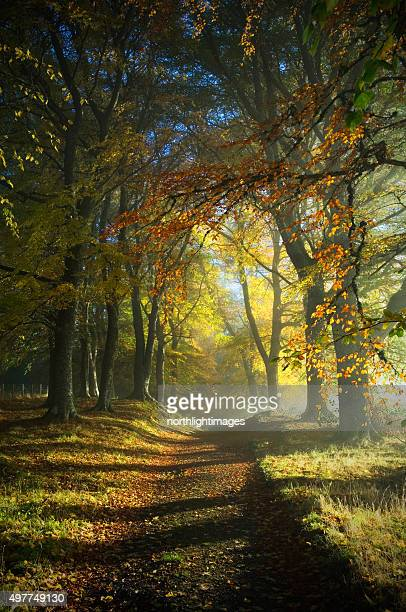path through autumn woods - woodland stock pictures, royalty-free photos & images