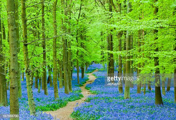 Path through blue flowers in a beautiful forest