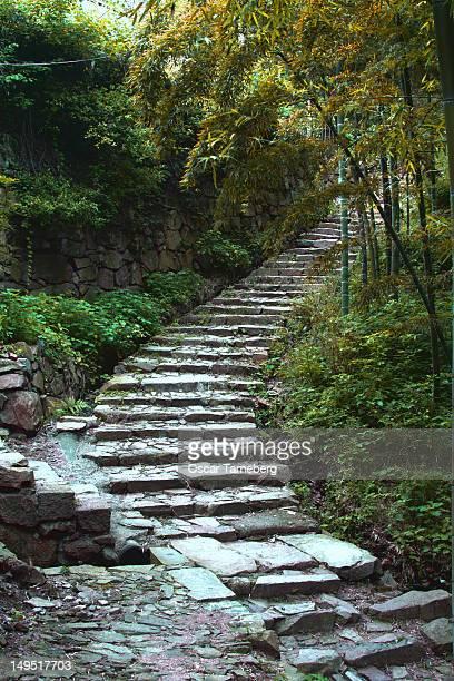 Path through Chinese bamboo grove