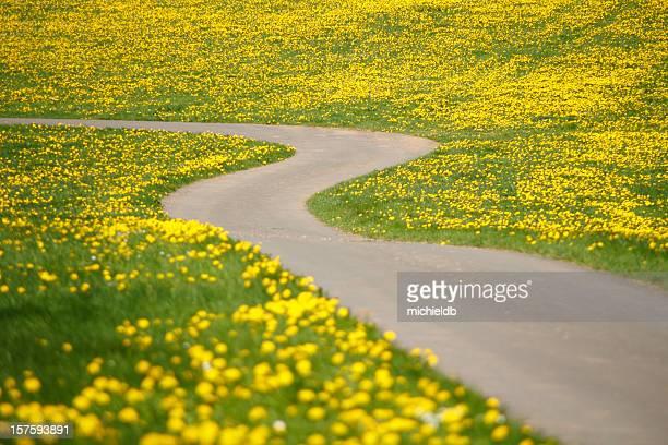 path through dandelions
