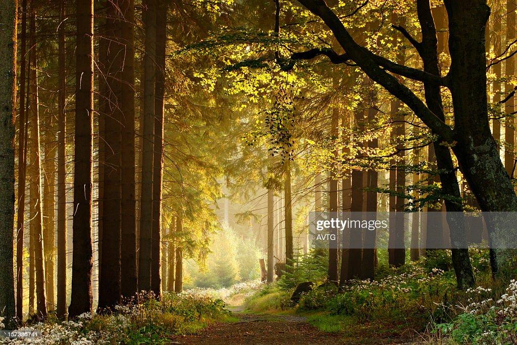 Path through Enchanted Autumn Forest : Stock Photo