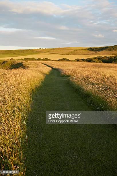 path through grass field - heidi coppock beard - fotografias e filmes do acervo