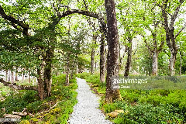 Path through Killarney National Park