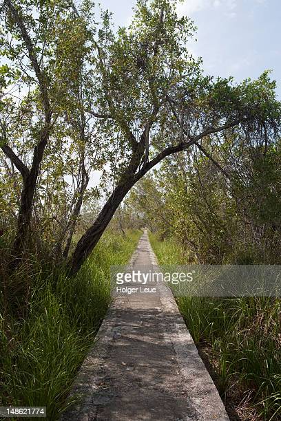 Path through mangroves where the Revolution leaders came to Cuba.