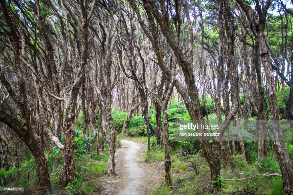 Path through Manuka forest at Abel Tasman National Park, New Zealand : Stock Photo