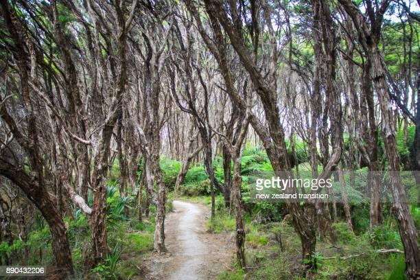 Path through Manuka forest at Abel Tasman National Park, New Zealand