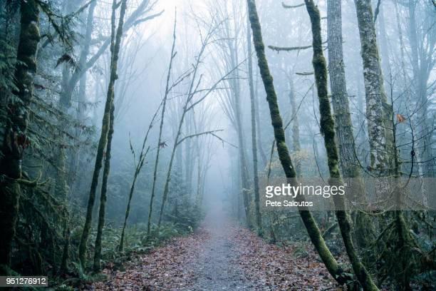 path through misty forest, bainbridge, washington, united states - kitsap county washington state stock pictures, royalty-free photos & images