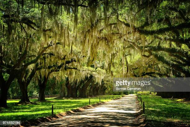 path through park, charleston, south carolina, usa - template_talk:south_carolina stock pictures, royalty-free photos & images