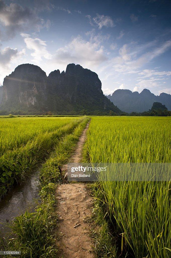 Path through rice paddies leading to mountains. Vang Vieng, Laos, Asia. : Stock Photo