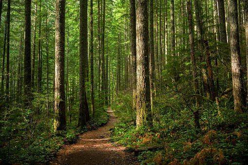Path Through Sunlit Forest 1205214235