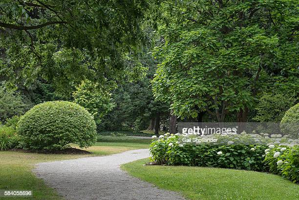 path through the greenery - bush stock pictures, royalty-free photos & images