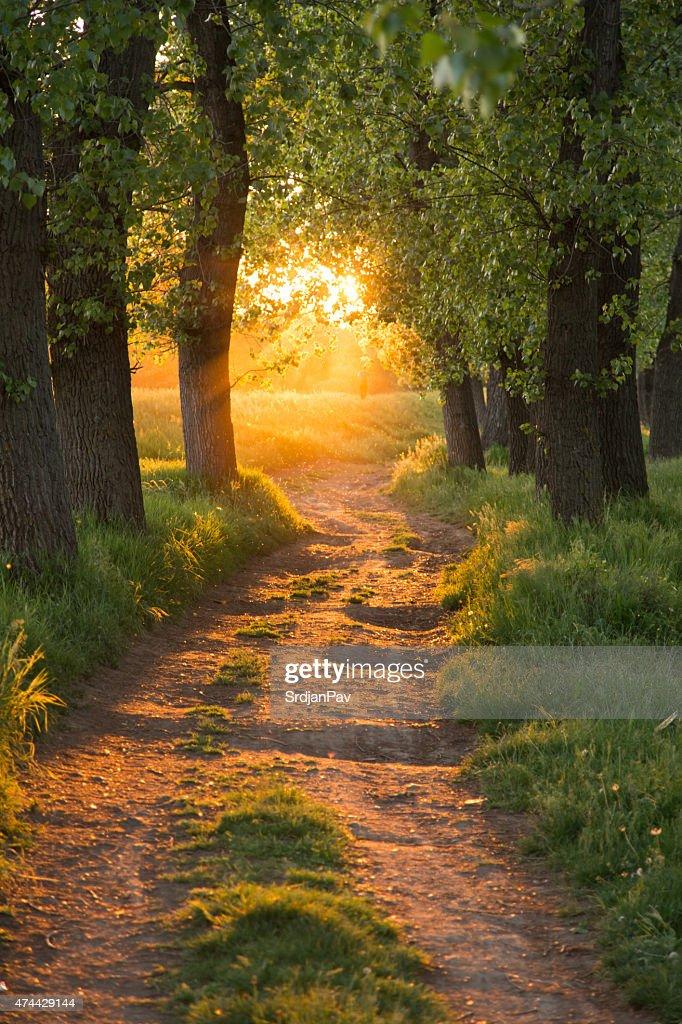 Weg durch die Magic Forest : Stock-Foto