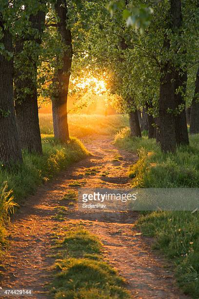 path through the magic forest - heaven stock pictures, royalty-free photos & images