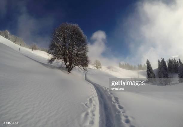 Path through the snow, Ibergeregg, Schwyz, Switzlerand