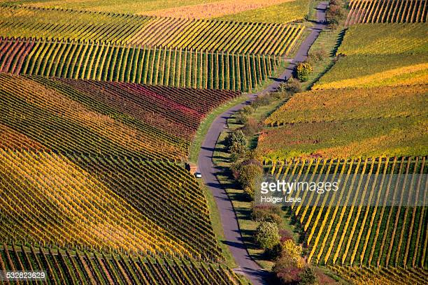 Path through vineyards in autumn