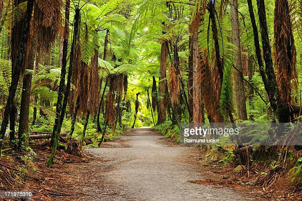 Path through Whakarewarewa Forest