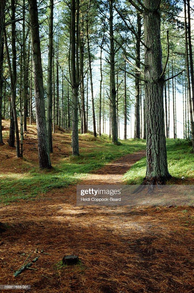 Path through woods : Stock Photo