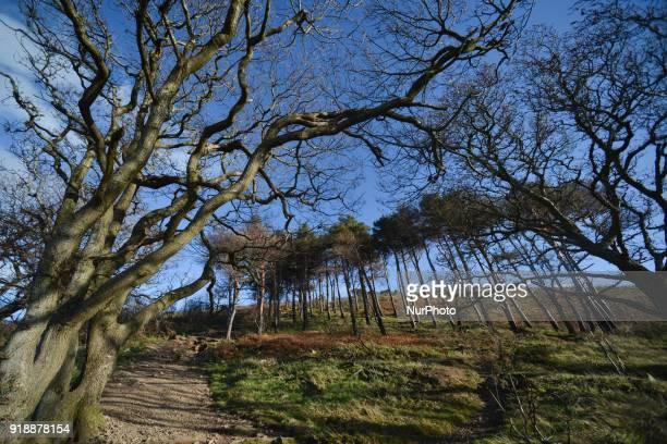 A path to Bray Head On Thursday February 15 Dublin Ireland