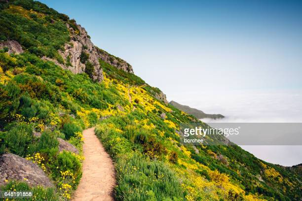 path to pico ruivo on madeira island - lareira stock pictures, royalty-free photos & images