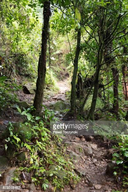 Path to Rio Celeste in Tenorio Volcano National Park, Costa Rica
