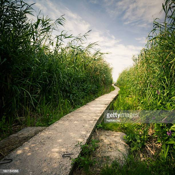 Path to the lake with reeds