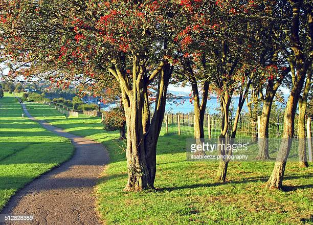 Path under the hawthorn trees