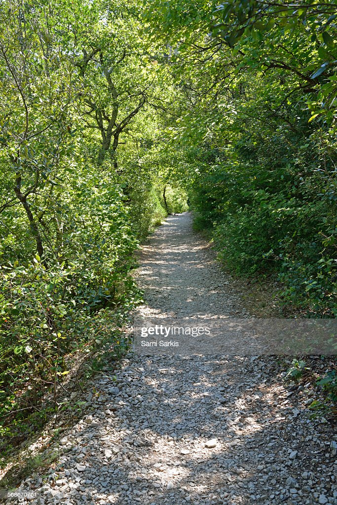 Path under trees in a forest : Stock Photo