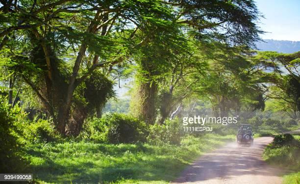 Pad met 4 x 4 in de Ngorongoro krater, op de weg wilde dieren zien.