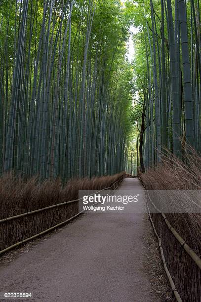A path with a traditional fence winding through the bamboo grove at the Tenryuji Temple in Arashiyama Kyoto Japan