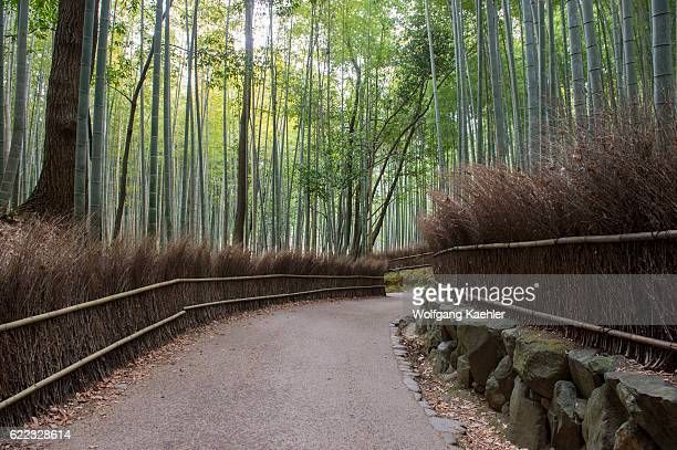 A path with an traditional fence going through the bamboo grove at the Tenryuji Temple in Arashiyama Kyoto Japan